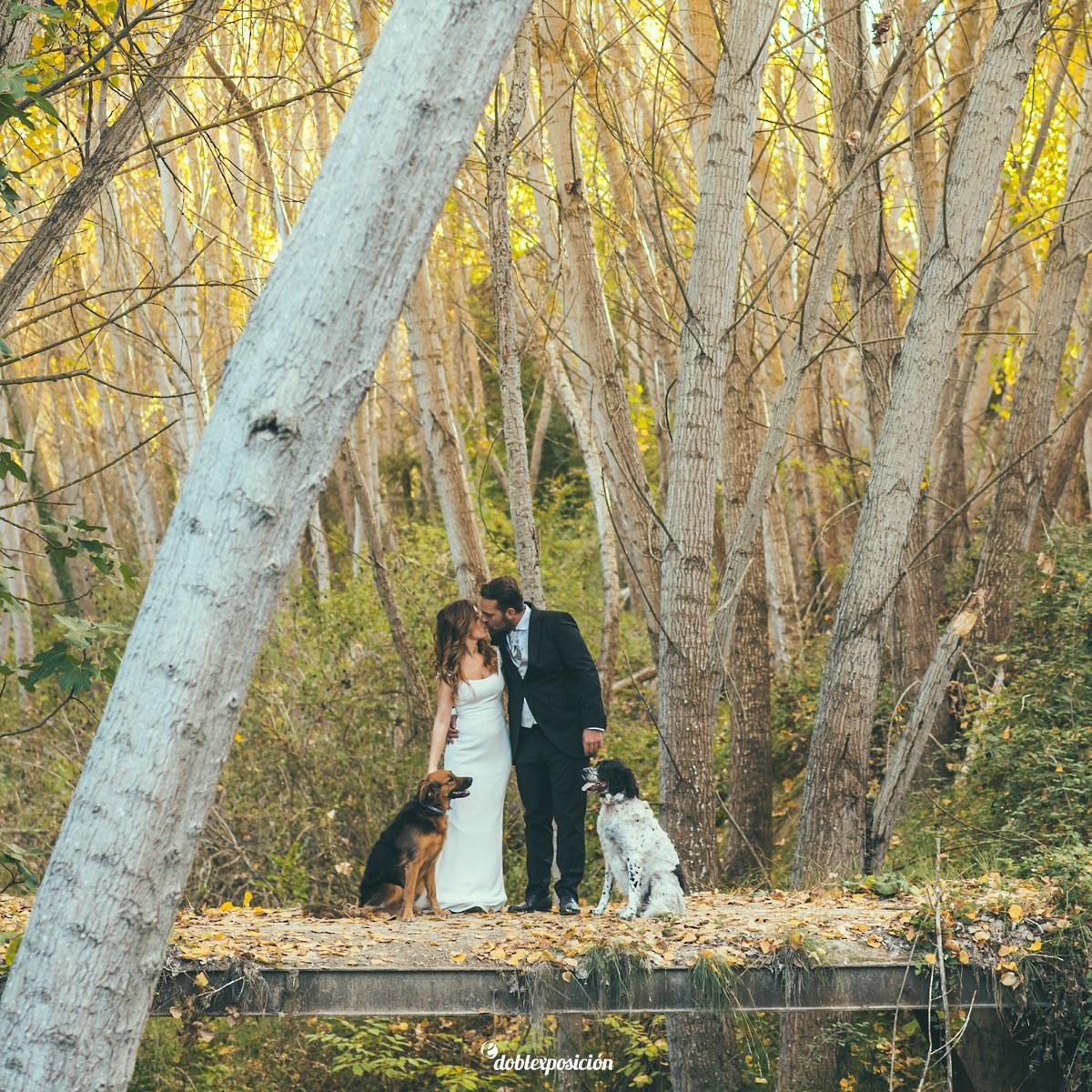 fotografos-boda-elche-alicante-reportaje-bosque-postboda-011