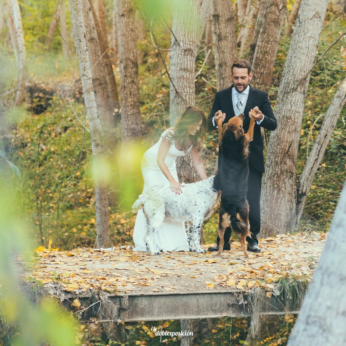 fotografos-boda-elche-alicante-reportaje-bosque-postboda-012