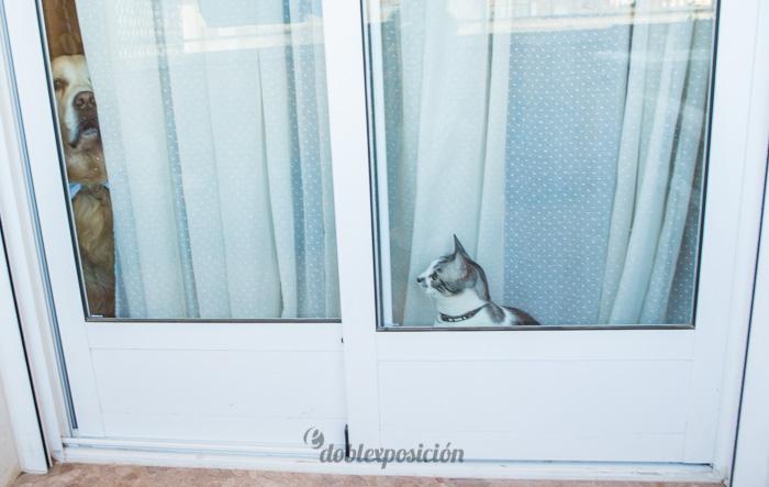 reportaje-fotografia-de-bodas-con-mascotas-03