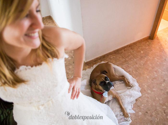 reportaje-fotografia-de-bodas-con-mascotas-09