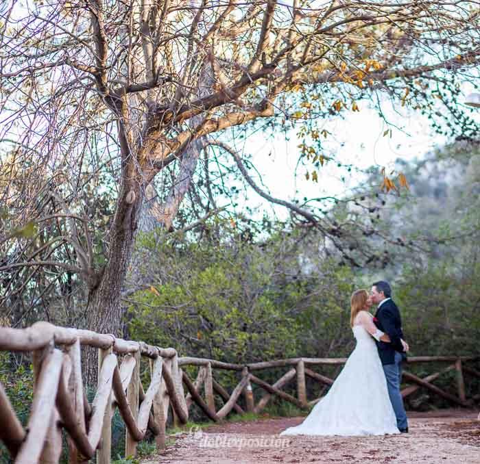 reportaje-fotografia-de-bodas-con-mascotas-18